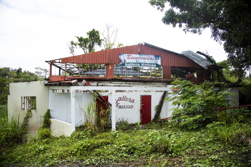Since Hurricane Maria tore the roof off this cockfighting arena in the mountains of Vega Alta in 2017, nature has slowly been taking over.