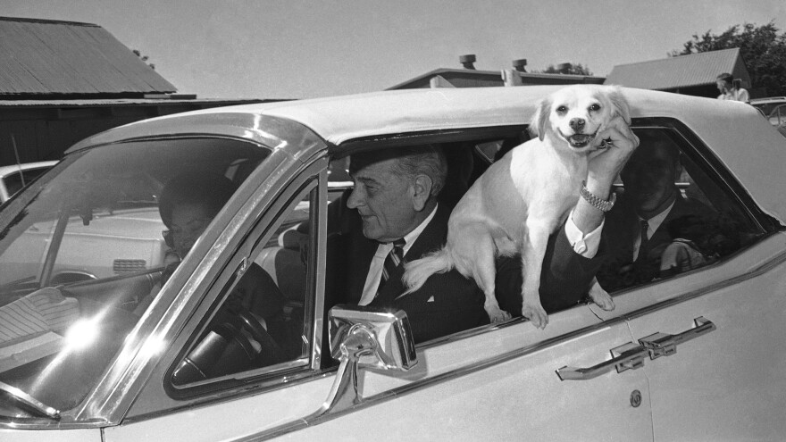 Yuki, President Lyndon Johnson's dog, is held out the window of the car driven by LBJ as the first family starts a ride around the Texas ranch in Stonewall, Texas, Sept. 30, 1967.