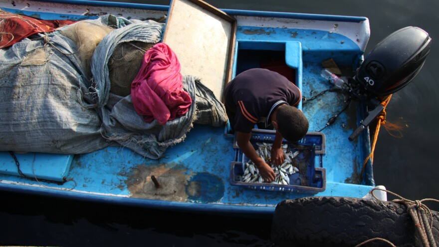 When boats come in to the Gaza city harbor, the fish are small and few. An Israeli blockade keeps Gazan boats within 3 nautical miles from shore, where there are few fish to catch.