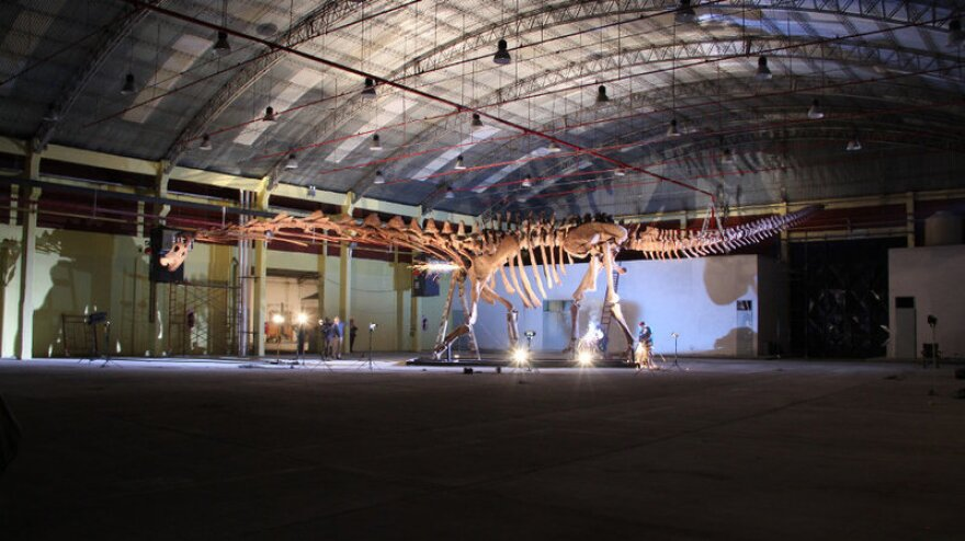 The titanosaur, seen here nearly spanning the width of a hangar, is considered the largest known dinosaur in the world. (D. Pol/Courtesy of the Museo Paleontologico Egidio Feruglio)