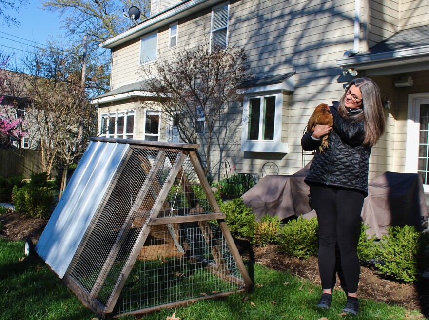 Anne Miller meets the new residents of her backyard  in Olivette. She is renting the coop and two hens for six months to decide if chicken-keeping is for her.
