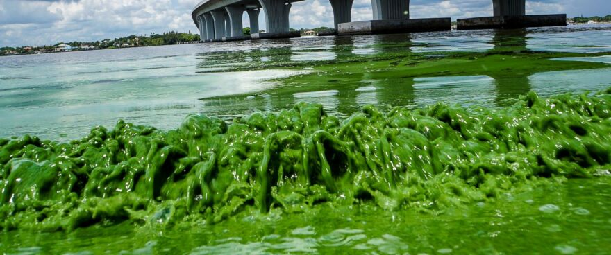 Polluted runoff from Lake Okeechobee was blamed this summer for a toxic-algae bloom coating waterways along the Treasure Coast and Southwest Florida.