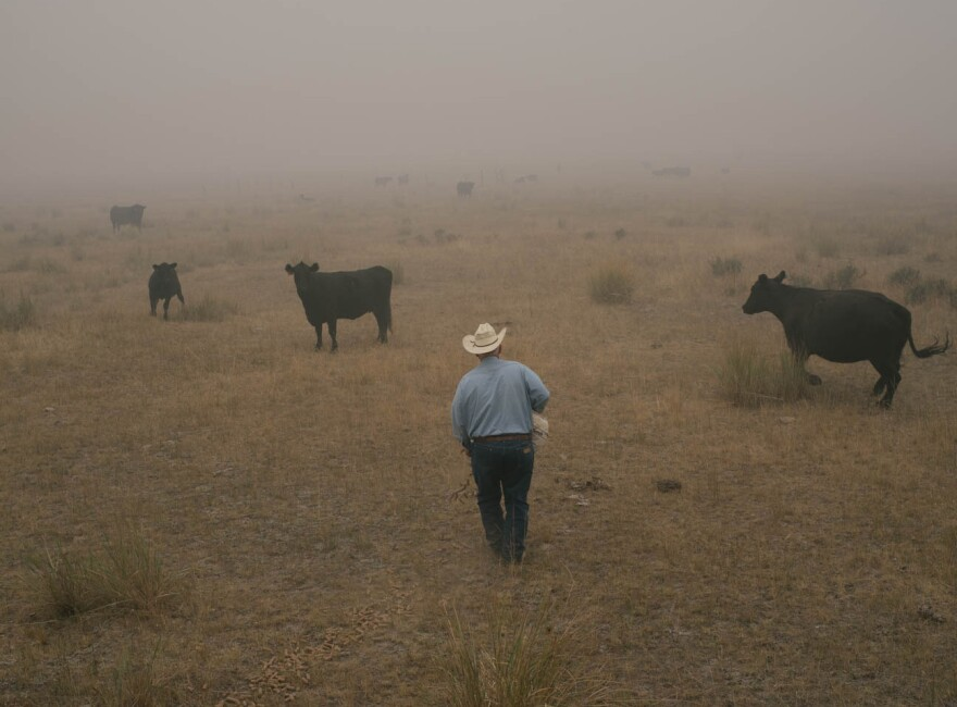 Cattle rancher Craig Vejraska pours out feed while checking on his cattle in a smokey field in Cox Meadow, as the Okanogan Complex fires burn outside Omak, Wash., Aug. 26, 2015.