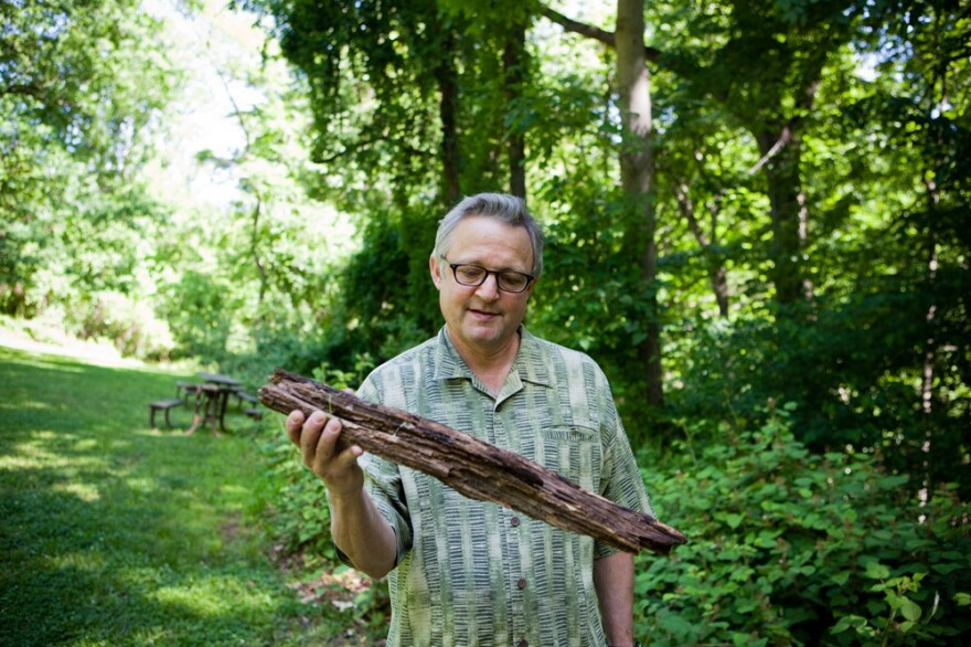 Joe Palca scoured the forest for firewood. But will it burn?