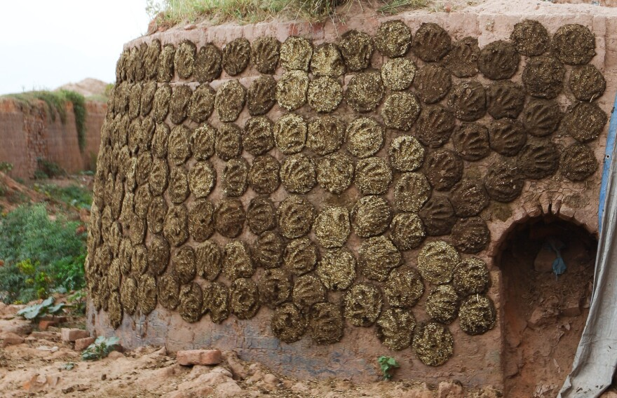 Dung patties dry on the wall of a coal-fired brick oven. They're rolled into cakes, then stuck on the wall with the smack of a hand, leaving an imprint.