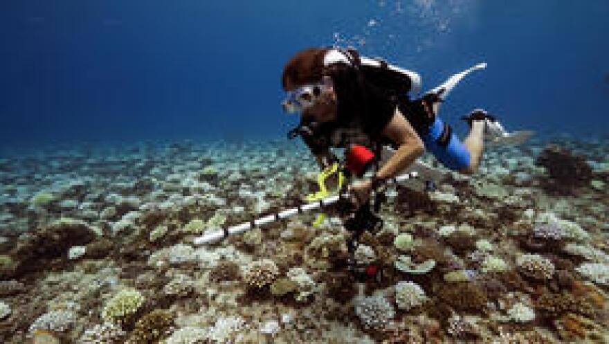 Dr. Andy Bruckner is research coordinator for the Florida Keys National Marine Sanctuary.