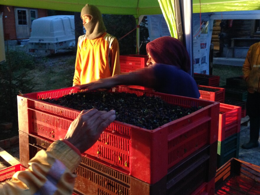 After a day in the Finnish woods, berry pickers from Thailand weigh the day's bilberry harvest into 22-pound piles, and tally up their earnings. They will get 12 euros ($14) per pile.