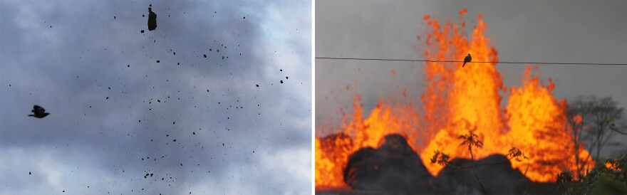 Birds fly past pieces of lava erupting from a Kilauea fissure.