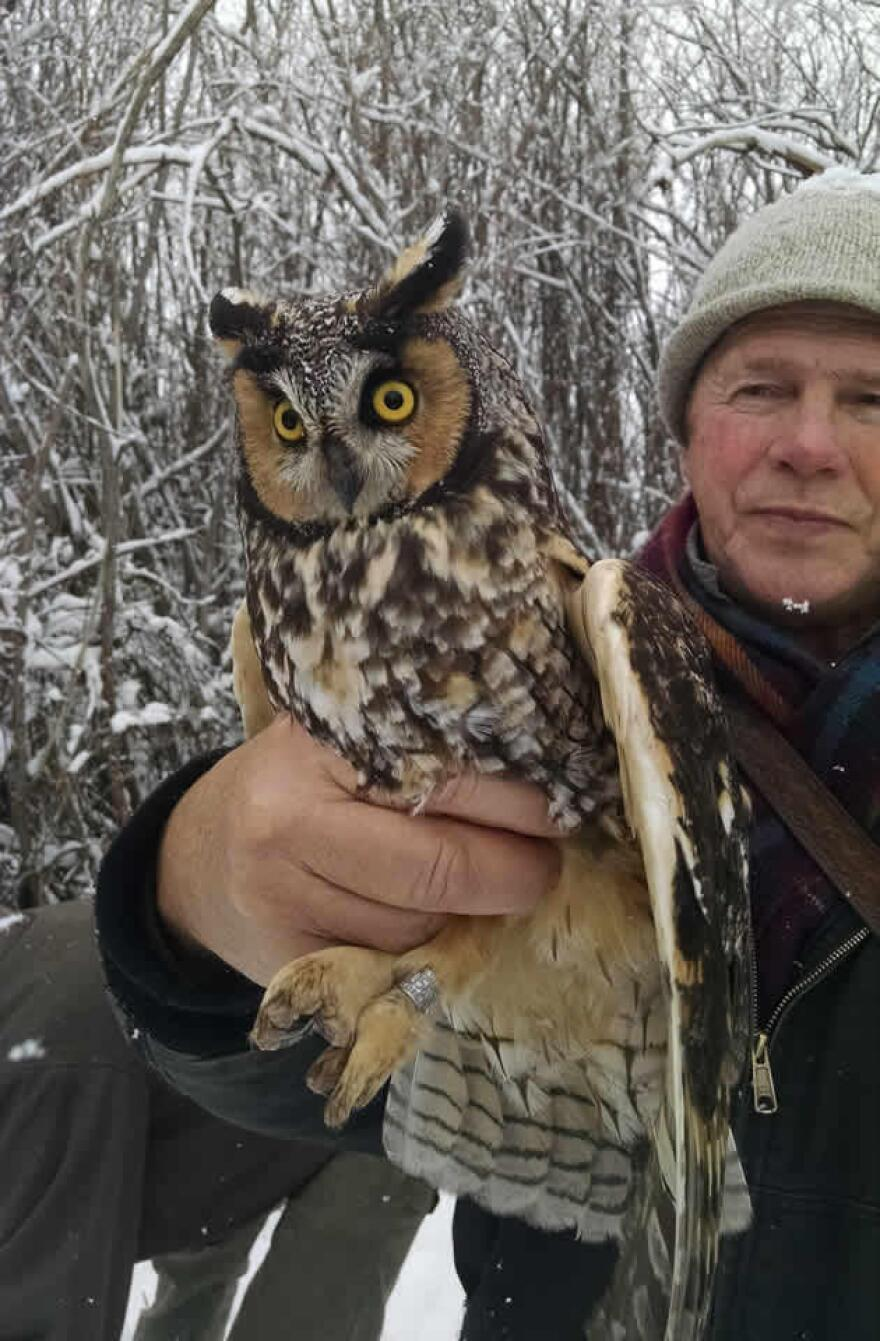 Denver Holt holds a long-eared owl captured and banded for research purposes.
