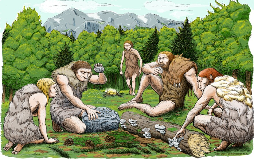 A new study of the dental plaques of three Neanderthals reveals surprising facts about their lives, including what they ate, the diseases that ailed them and how they self-medicated (and smooched). (Above) An illustration of Neanderthals in Spain shows them preparing to eat plants and mushrooms.