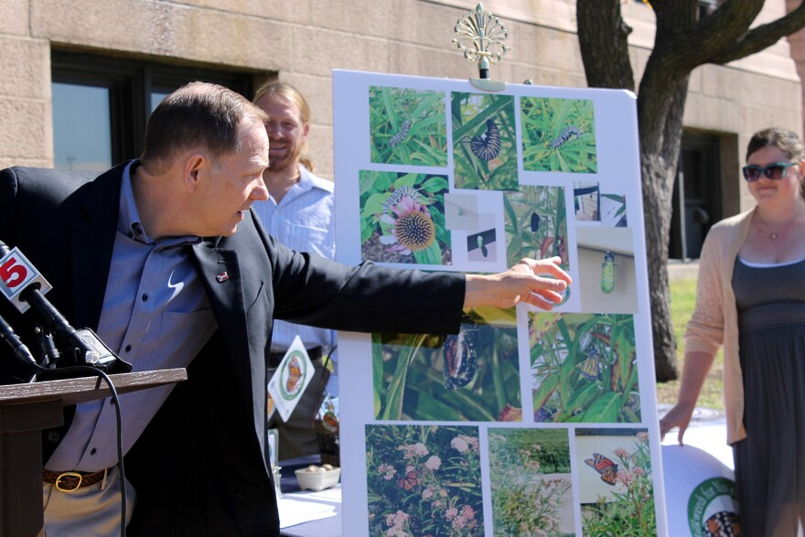 St. Louis Mayor Francis Slay points to a photo he took of a monarch chrysalis near his milkweed garden during a ceremony at city hall Saturday Sept 19, 2015.