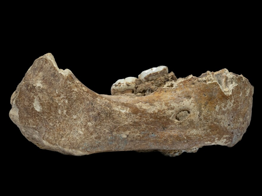 The Xiahe mandible was originally found in 1980 in Baishiya Karst Cave. Researchers say the bone is 160,000 years old and came from a Denisovan.