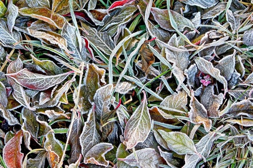 frost late autumn.jpg