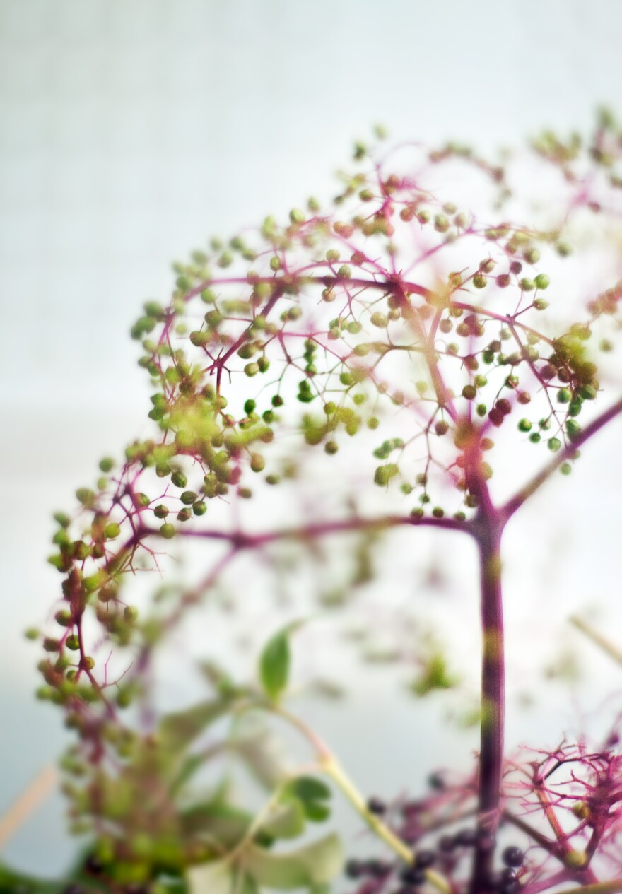 kraly_under_the_berry_tree_2009.jpg