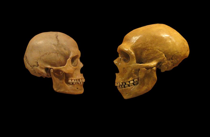 human_fossil_skulls.png