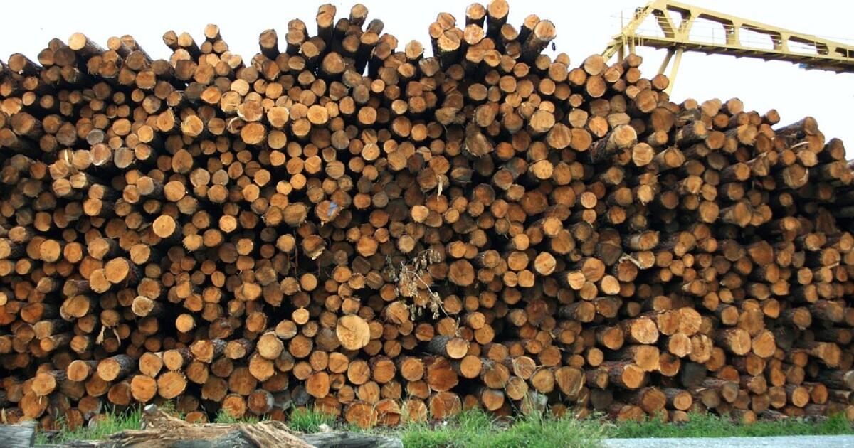 logs timber pd.
