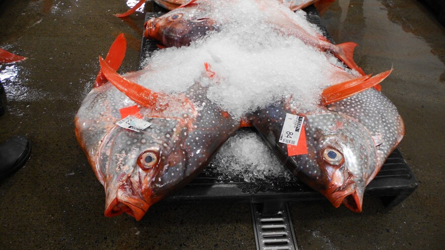 Among the 50,000 pounds of fish at the Honolulu auction last Friday was this opah, or moonfish, <em>Lampris regius.</em>