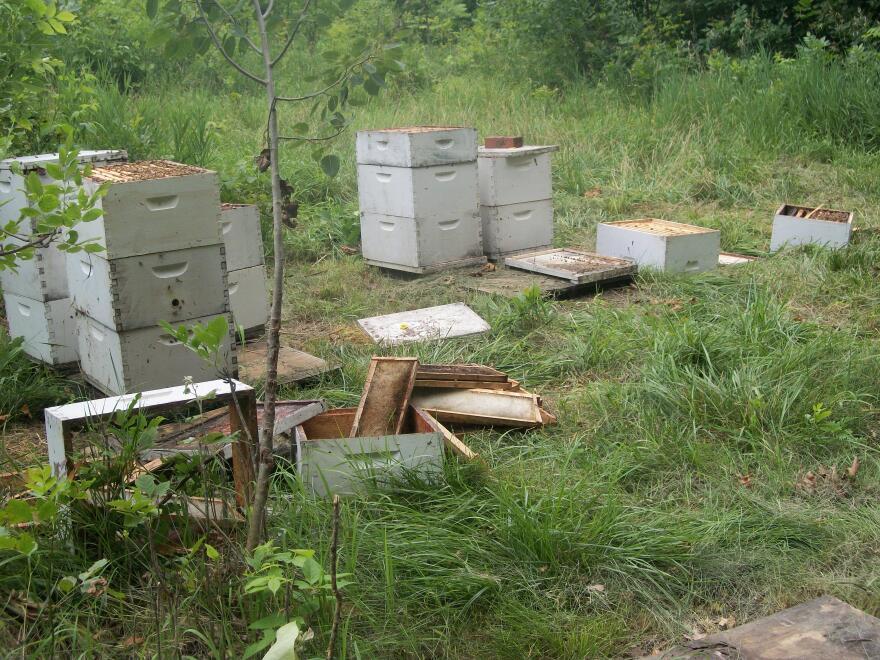 bee_hives_0.jpg