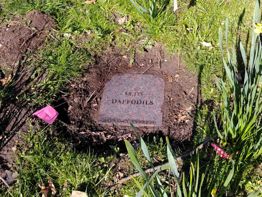 A photo of the plaque when it was unearthed by the maintenance crew this year.