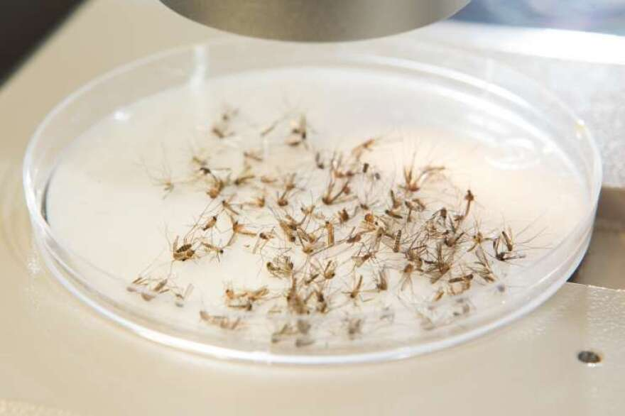 Florida has now had 50 cases of Zika virus, including six in Central Florida.