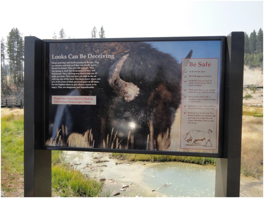 Yellowstone National Park warns visitors not to approach or harass bison. Many tourists just don't listen.