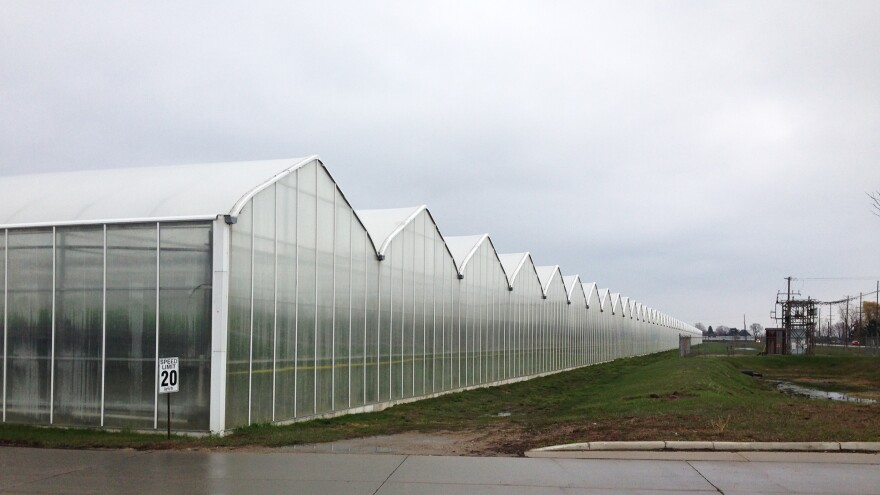 Greenhouses at Mastronardi Produce Sunset Grown in Kingsville, Ontario, Canada