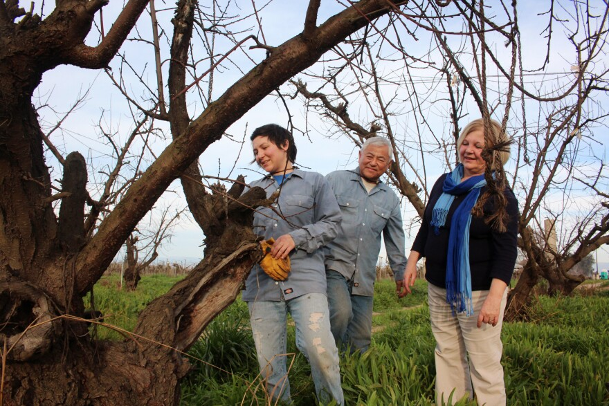 Nikiko Masumoto, her father, Mas, and her mother, Marcy, inspect one of the old Suncrest peach trees that Mas almost destroyed in 1987.