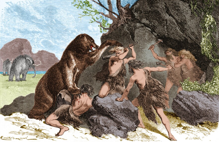 An illustration from 1870 shows Prehistoric men using wooden clubs and stone axe to fend off an attacks by a large cave bear. The cave bear (Ursus spelaeus) was a species of bear that lived in Europe during the Pleistocene and became extinct at the beginning of the Last Glacial Maximum, about 27,500 years ago. Mammoths can be seen in the background.