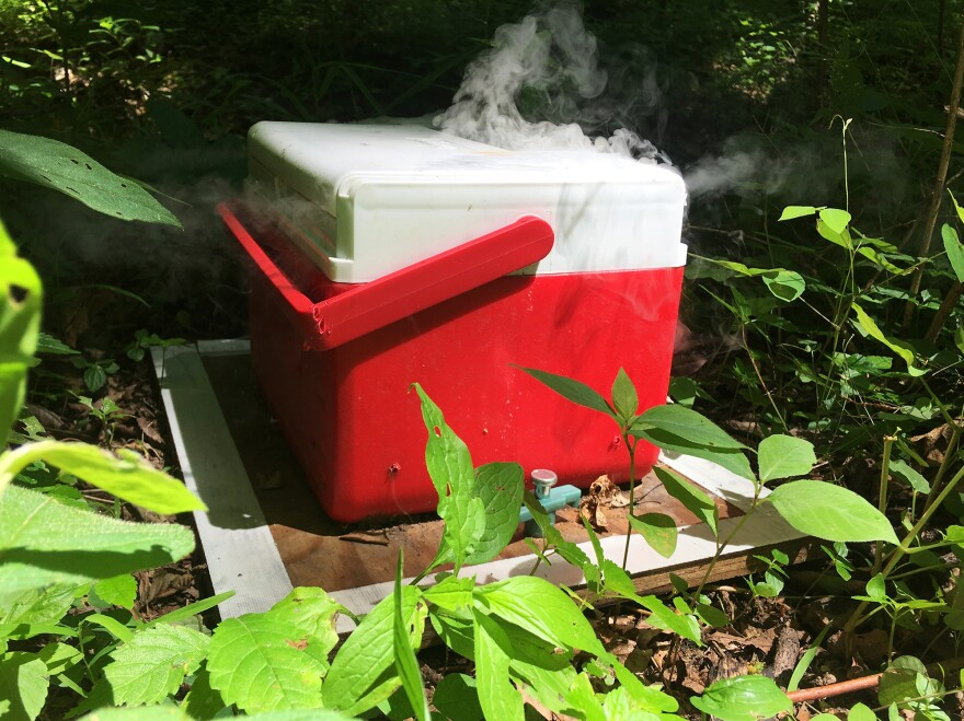 Baited tick trap containing carbon dioxide-producing dry ice. The lone star tick is an active hunter, following trails of carbon dioxide to sniff out hosts up to 16 feet away.
