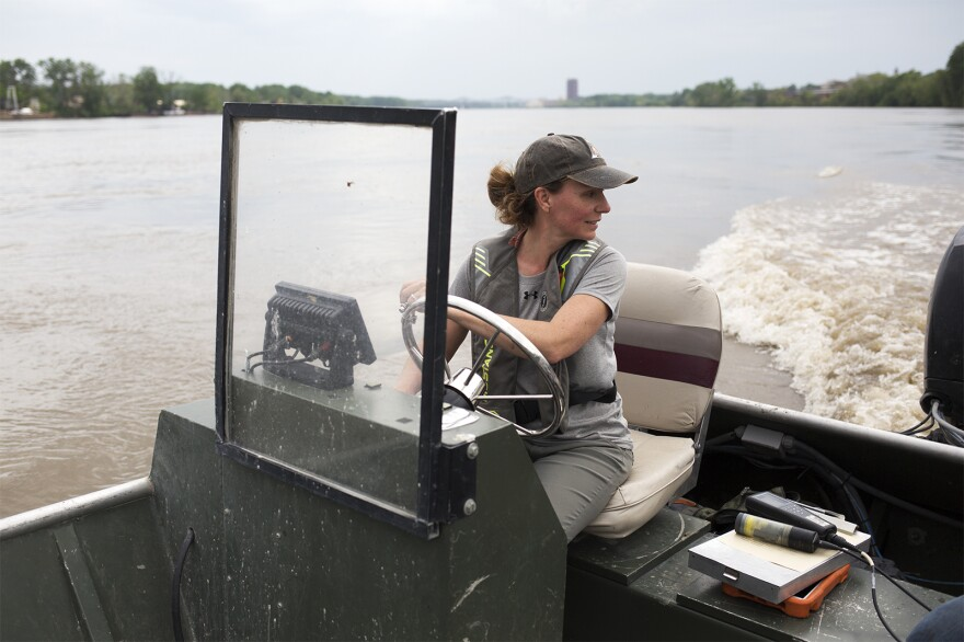 MDC fisheries biologist Sarah Peper looks for a shallow area of the Missouri River to release the young pallid sturgeon on May 8, 2019.