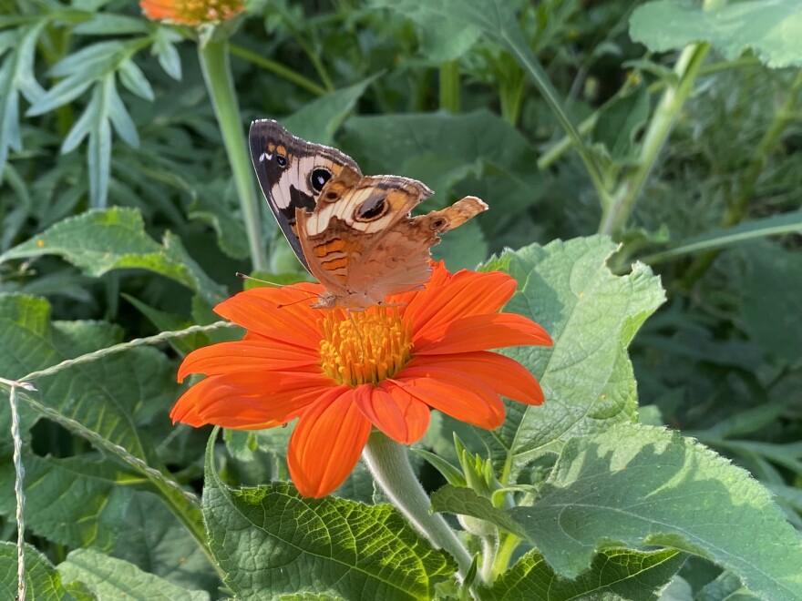 091021_cm_Butterfly