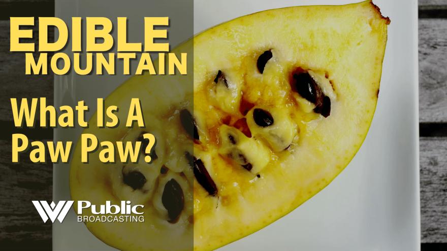 edible_mountain_-_paw_paw_1.png