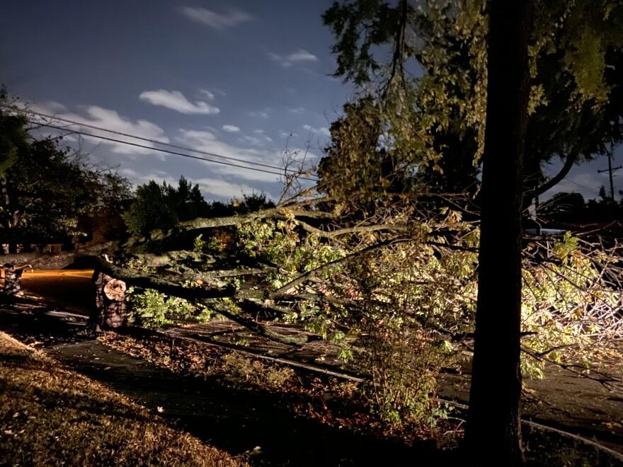 A large tree blocked Dalhart Drive in Richardson.