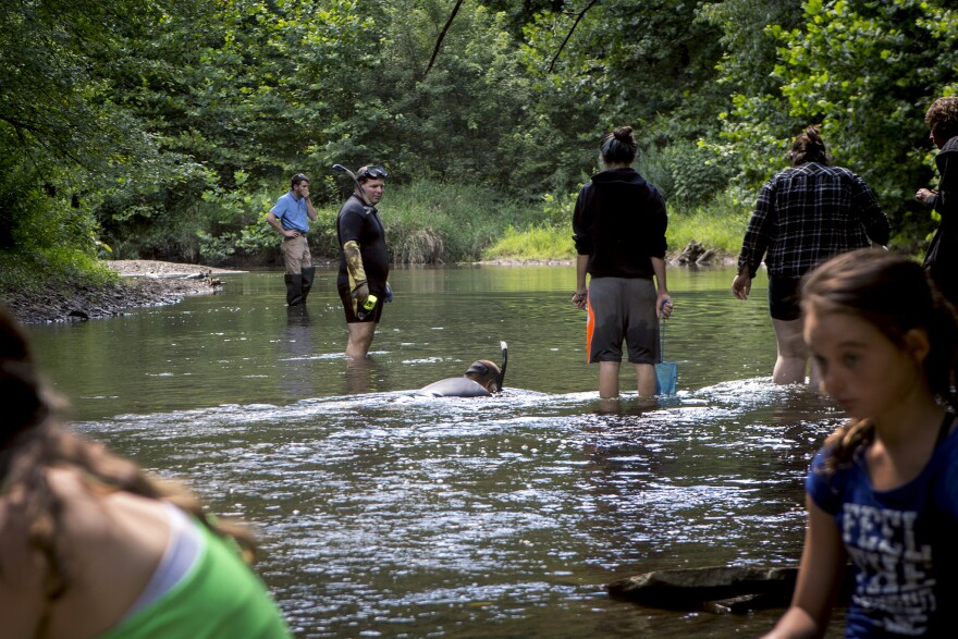 Members of Ohio environmental groups, zoo staff and people from the community all showed up to help introduce hellbenders to a new home.