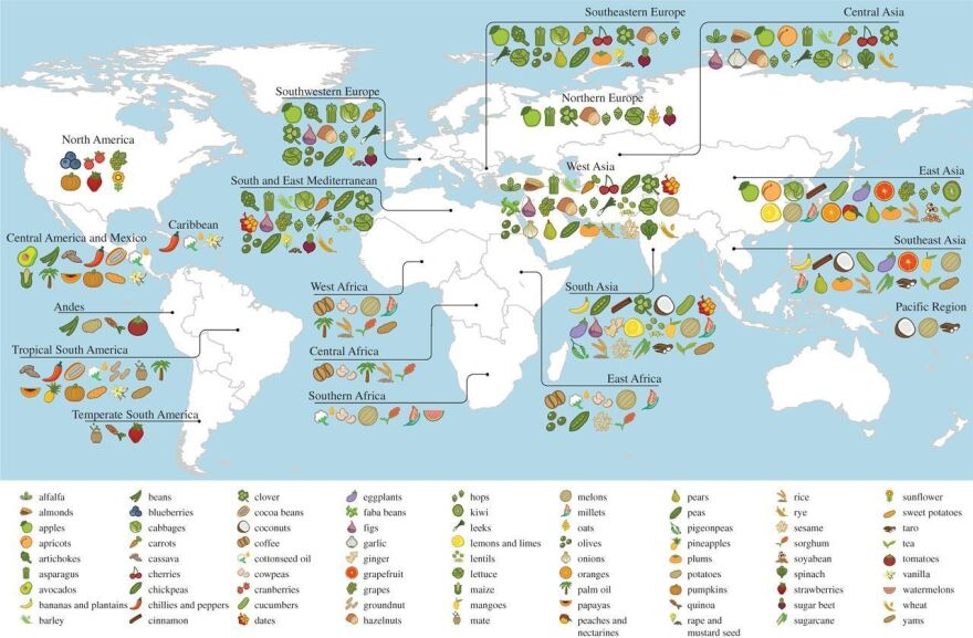 The great Russian plant explorer Nikolai Vavilov reasoned that crops originated in the region of the world where they, and their wild relatives, show up in greatest diversity. This map plots the center of origin and primary region of diversity for 151 different crops. (Some crops, like wheat, have more than one primary region of diversity.)