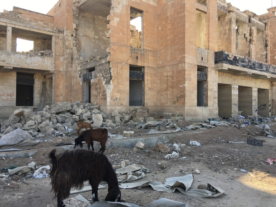 Goats forage in front of the ruins of the Mosul's historic train station –- destroyed in the fighting against ISIS.