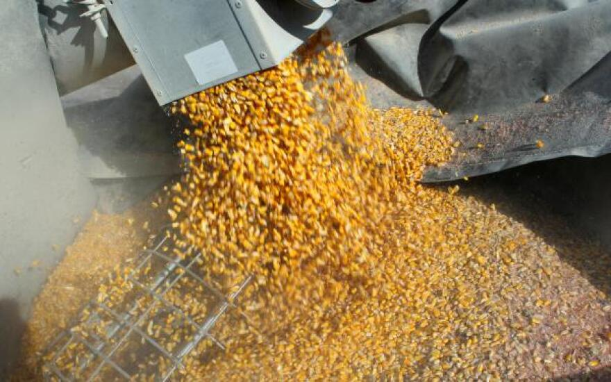 A string of record harvests in recent years have led to a glut of grain and low commodity prices. Ongoing trade disputes haven't helped, as fewer exports cut off an outlet for the oversupply.
