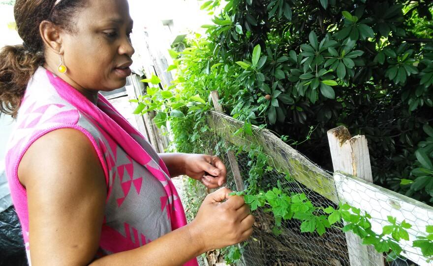 Momordica és a termesztés jellemzői - Vitaminok