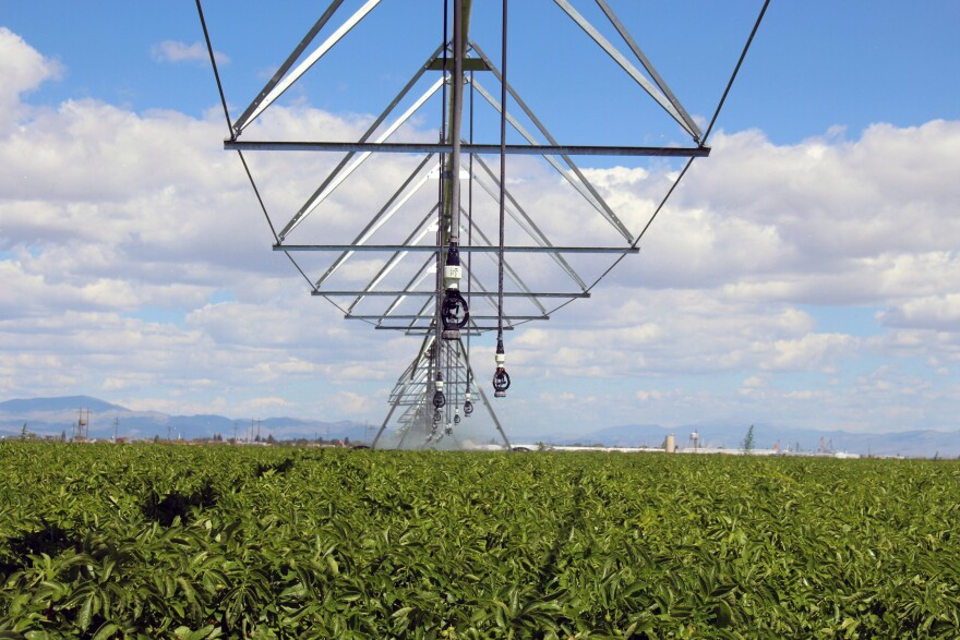 Sprinkler nozzles hang from a slow-moving rotating arm at a potato farm near Center, Colorado.
