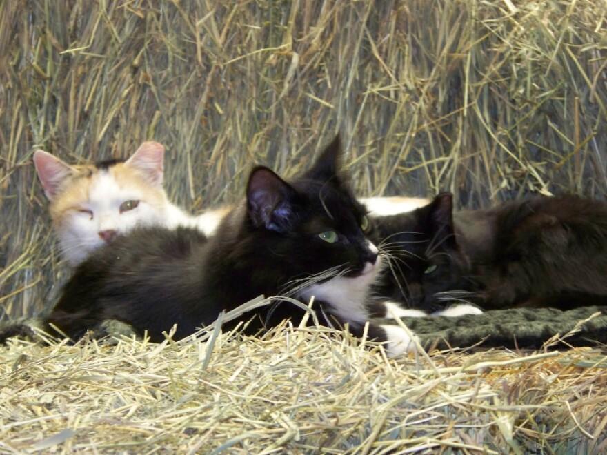 barncats2.jpg