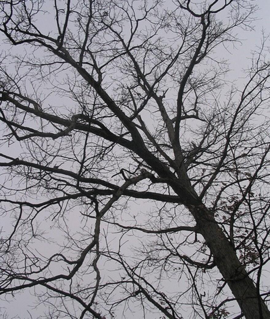 Winter_tree_by_Knilram_flickr_cc.jpg