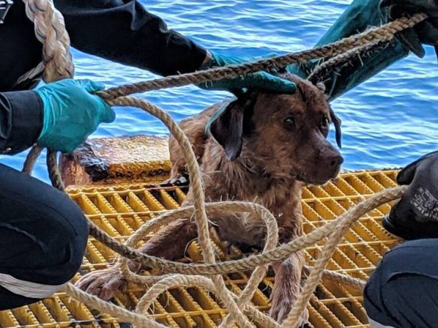 The oil rig workers used a rope to pull the dog to safety.
