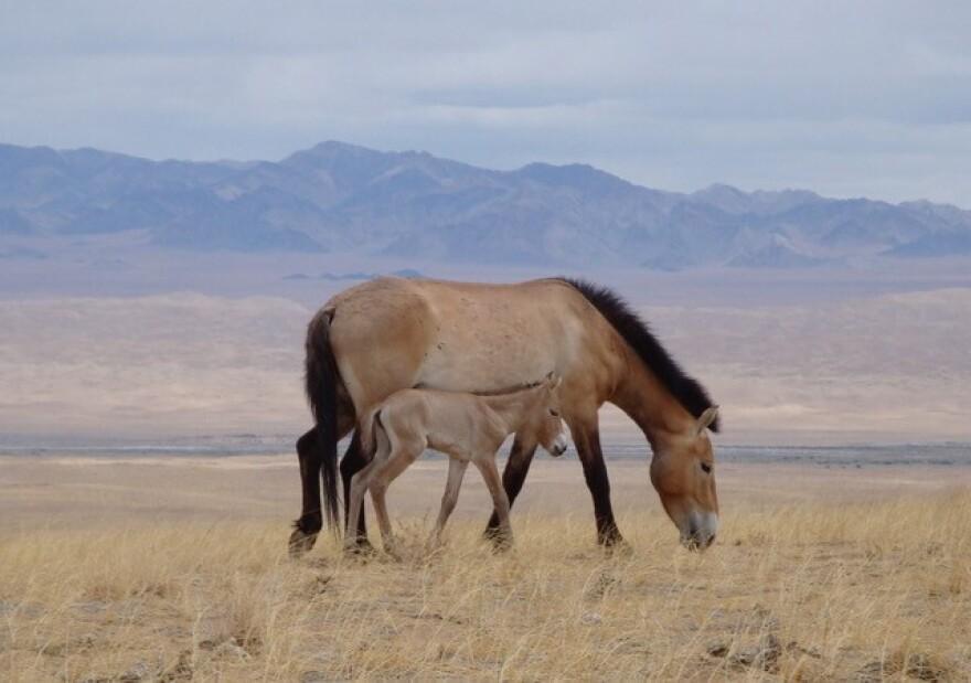 SarahKing_Horse.jpg