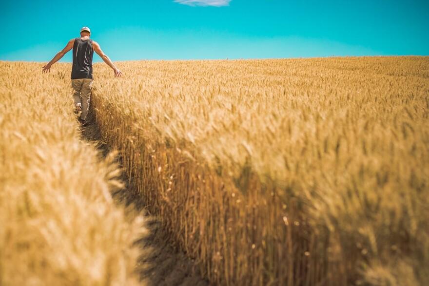 rural_grain_field_w_guy.jpg