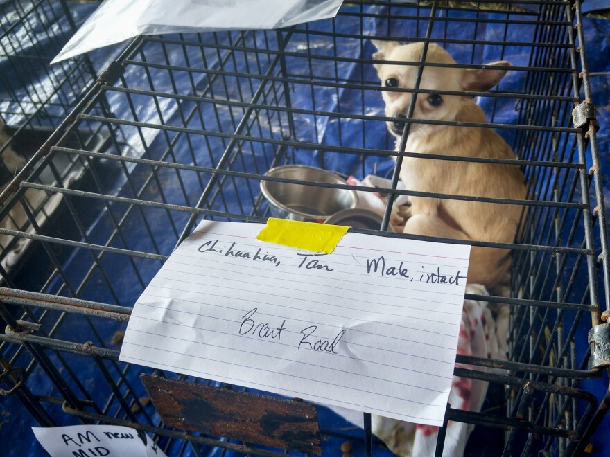Animals from across southeast Texas are being transported to a massive improvised shelter on the outskirts of Beaumont. The hope is that lost animals like this Chihuahua can be reunited with their owners.