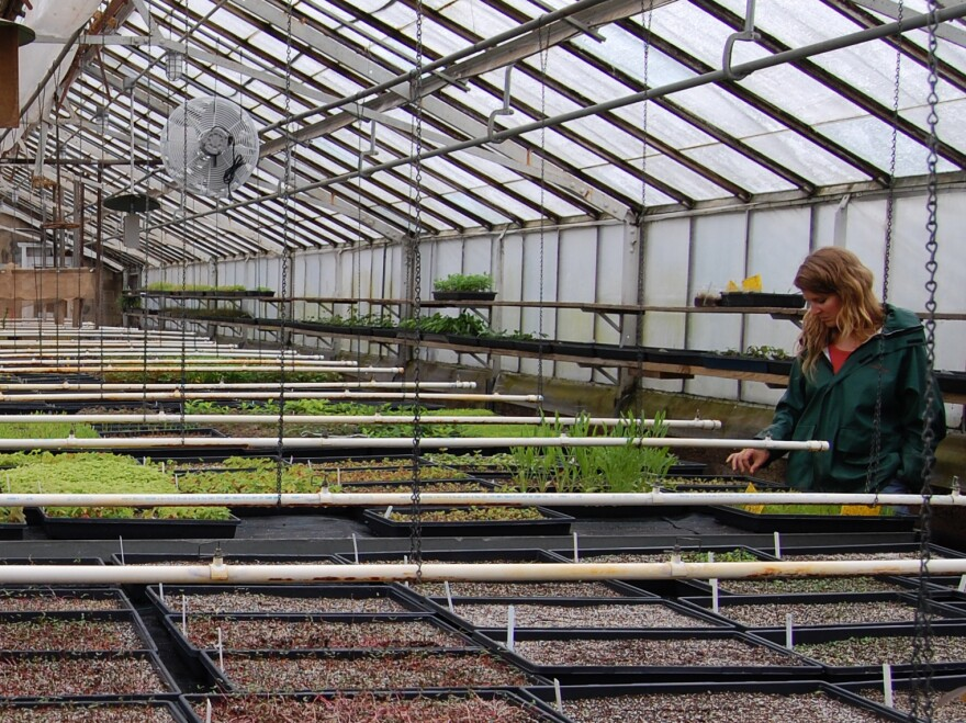 "Seeds are coaxed out of dormancy in the nursery at the Greenbelt Native Plant Center on Staten Island. The center considers its seed bank the ""Library of Congress"" for the region's native plants."