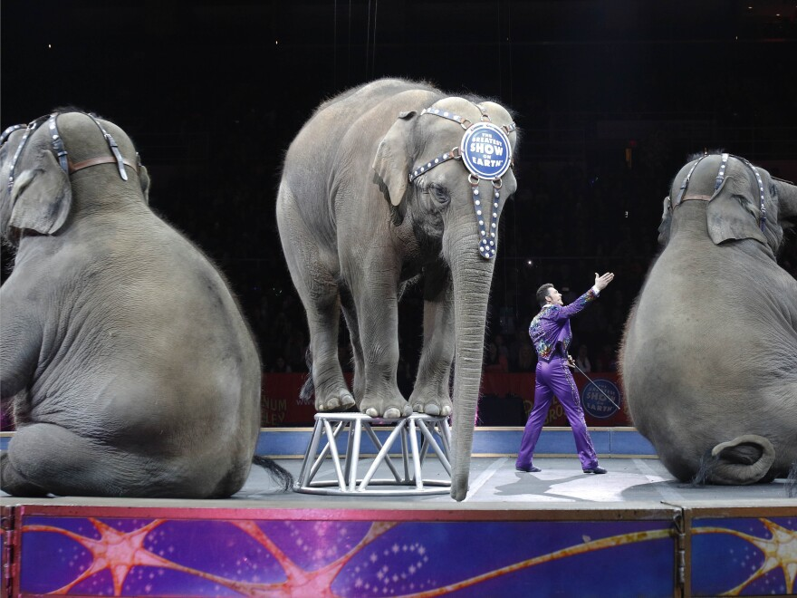 Asian elephants perform for the final time in the Ringling Bros. and Barnum & Bailey Circus last May, in Providence, R.I. After its controversial use of the animals for its shows, the company retired the elephants to its 200-acre Center for Elephant Conservation in Florida.
