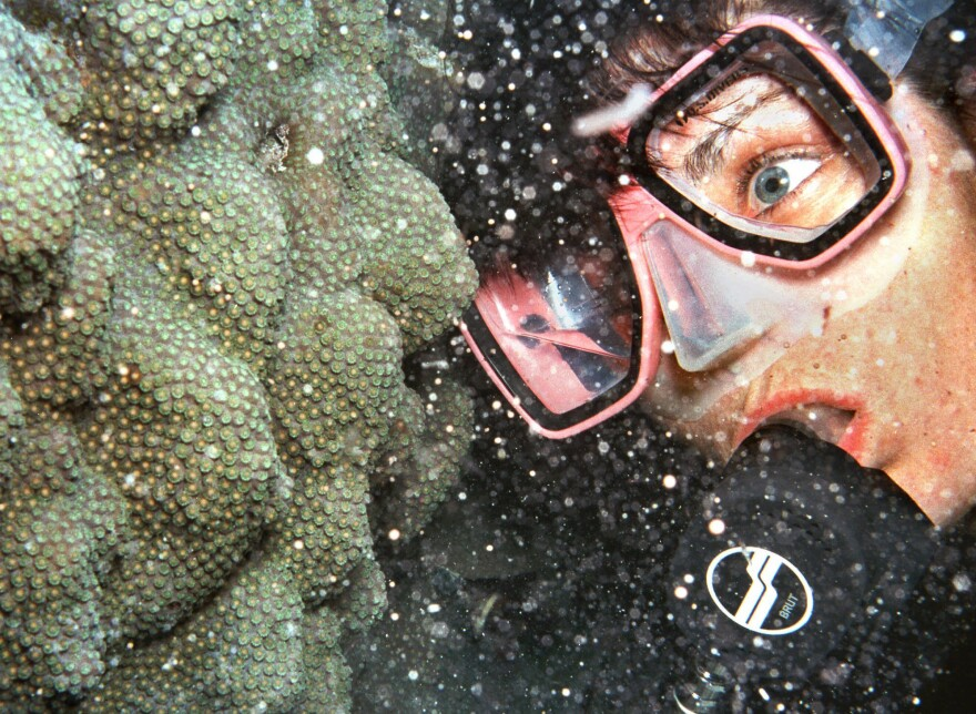 Diver Penny Bailey observes tiny eggs and sperm erupt from a portion of the Florida Keys' coral reef during a reef spawning phenomenon.