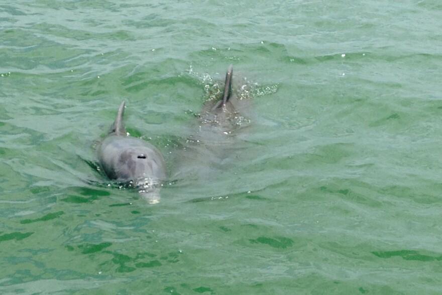 dolphin_new.jpg