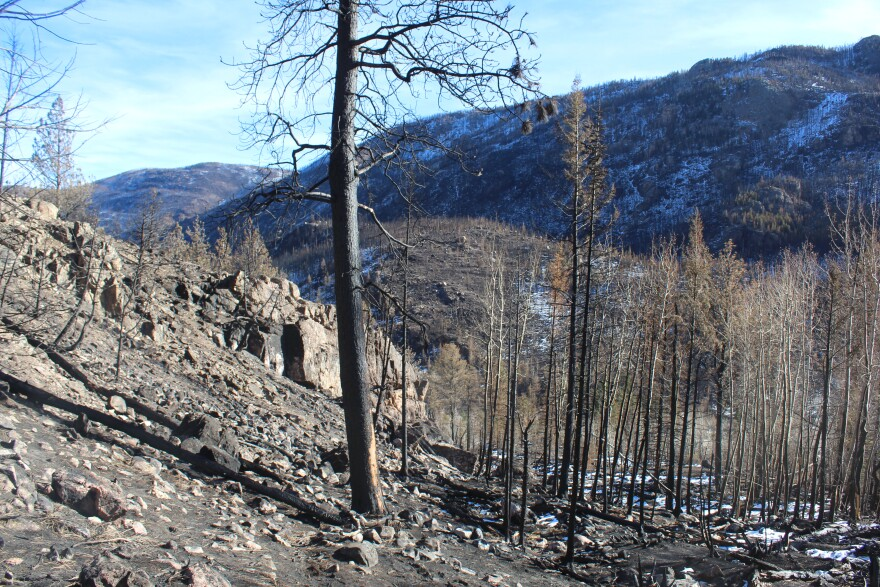 The Tunnel Creek drainage will be part of a study to look at how snowpack behaves in the Cameron Peak burn scar in northern Colorado.